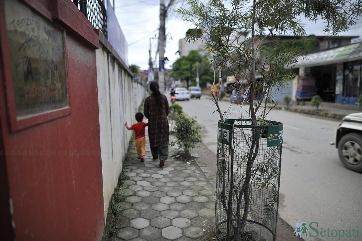 सानेपा सडकमा फुटपाथ खुम्च्याएर गरिएको वृक्षरोपण। तस्बिरहरु: नारायण महर्जन/सेतोपाटी