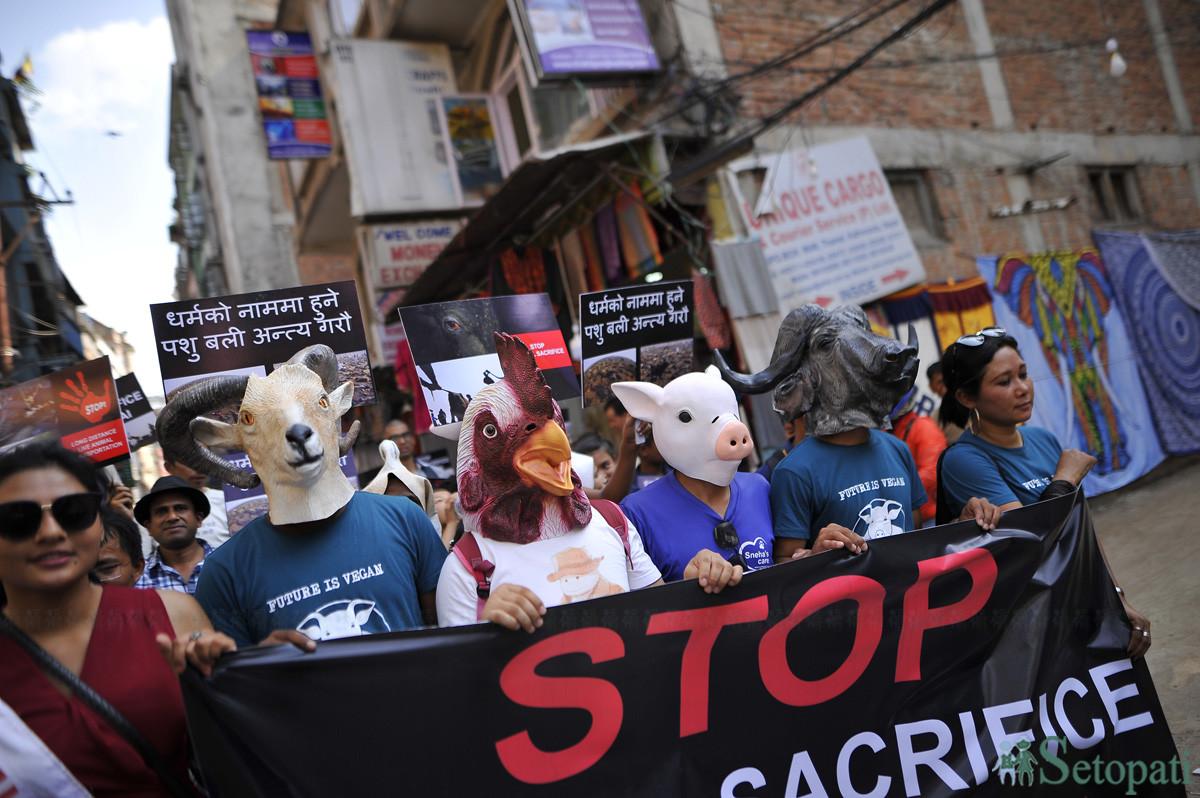 पशु कल्याण संघले शुक्रबार काठमाडौंमा पशु बली बन्द गरौं भन्दै निकालेको र्यालीमा सहभागीहरू। तस्बिर: नारायण महर्जन/ सेतोपाटी