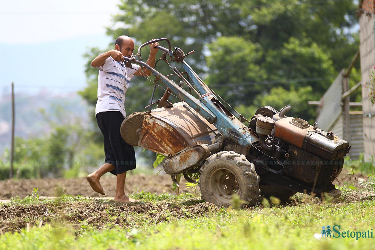 मनसुन सुरू भएसँगै बाली लगाउन ट्रयाक्टरले बारी जोत्दै एक किसान। तस्बिर : निशा भण्डारी/सेतोपाटी