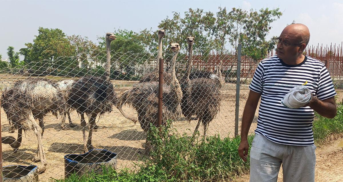https://raracms.setopati.com/uploads/shares/2020/sujita/ostrich palan/ostrich palan (1).jpg